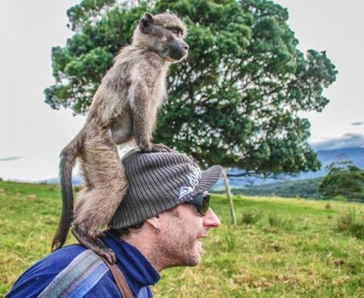Monkeys befriending man