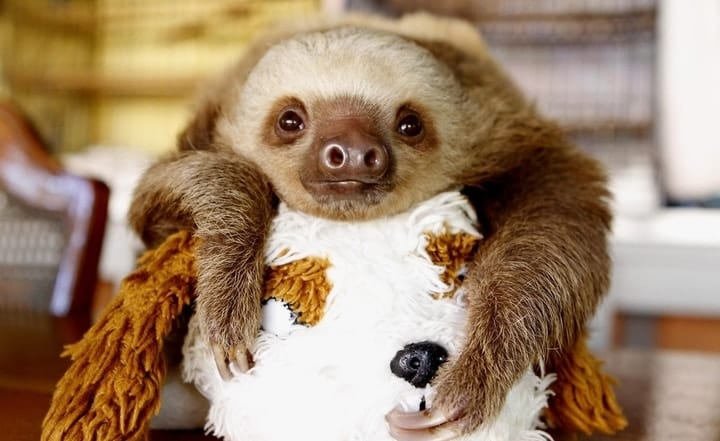baby sloth pet hugging stuffed animal
