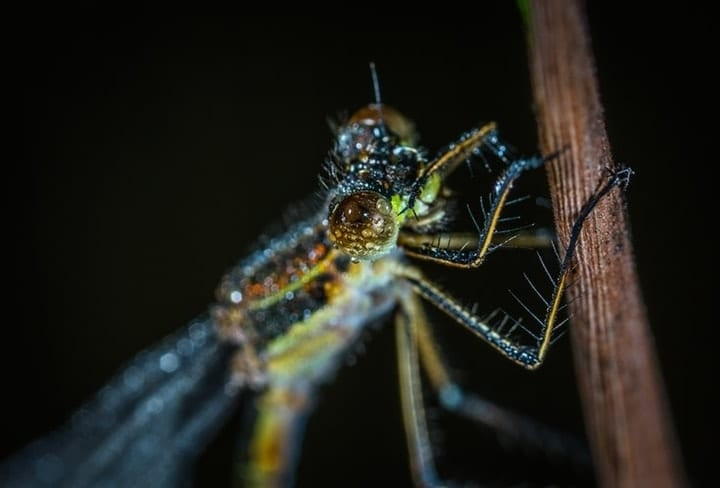 wasted taxpayer money, bug study, light exposure on insects