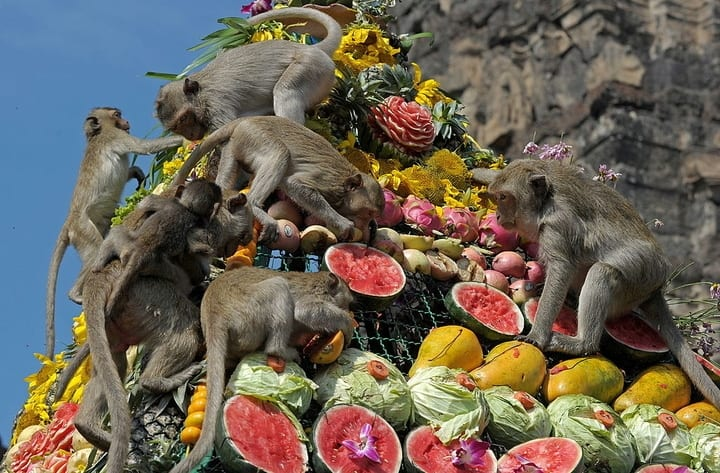 monkey-temple-banquet-feast