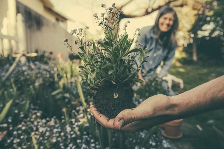 side hustle, become a gardener
