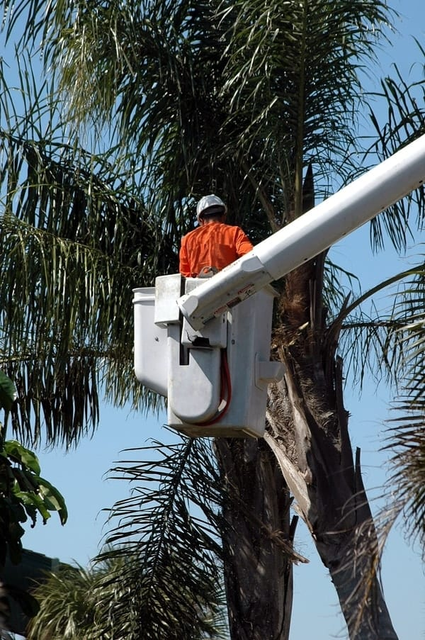 tree trimmer, most dangerous jobs