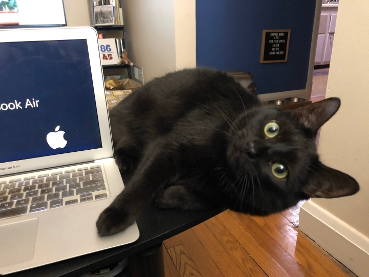 cats work from home, pets work from home