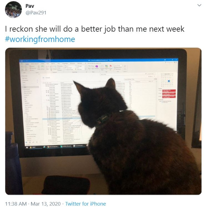 cats work from home, spreadsheet cat