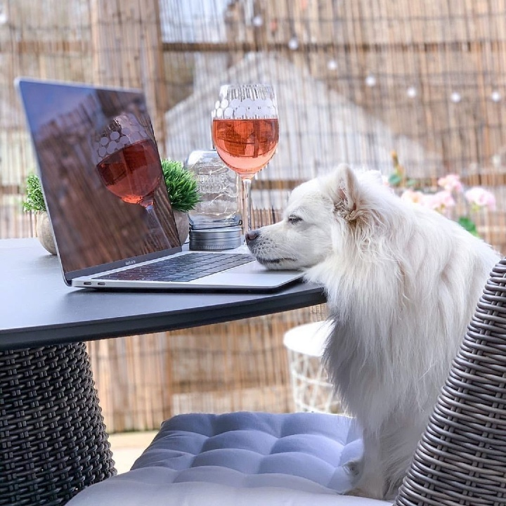 dog having a drink, happy hour dog, pets work from home