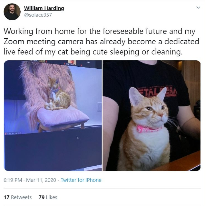 work from home cat, pets work from home, zoom call cat