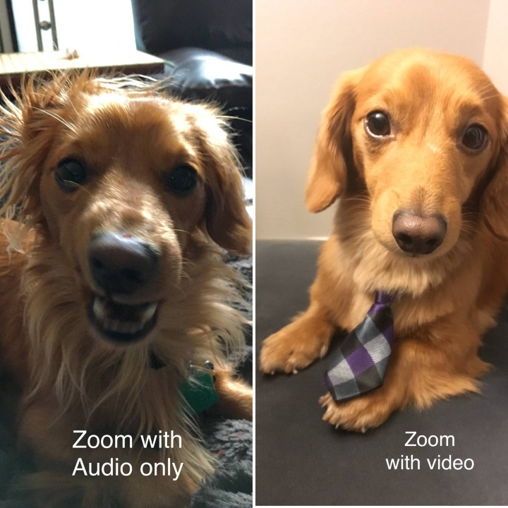 dog on zoom, work from home dog
