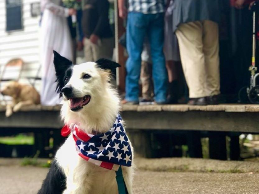 small town, dog in American flag bandanna